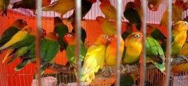 পাখি পালন ও কেনা-বেচায় লাইসেন্স না নিলে জেল-জরিমানা