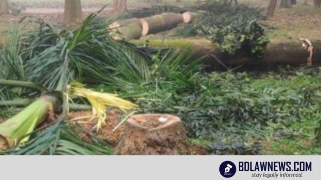 সোহরাওয়ার্দী উদ্যানে গাছ না কাটতে মৌখিক নির্দেশ হাইকোর্টের